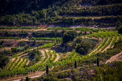 (Sarah [Harasgo]) Tags: vigne campagne champ raisin vignoble paysage photo canon eos500d