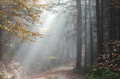 20161030-WOL_7722.jpg (viennalinux) Tags: spaziergang nebel herbst nature tauern fog natur ossiach ossiacher