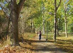 Via verde...Paseo (kirru11) Tags: vaverde paseo camino rboles hojas otoo gente personas cielo chopos farolas perro quel larioja espaa kirru11 anaechebarria canonpowershot
