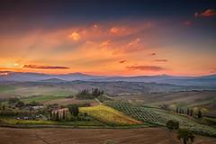 Olive Trees and Vineyard in Tuscany at sunrise, Italy (diana_robinson) Tags: olivetrees vineyard tuscany sunrise italy landscape fields grapesgrowing toscano pienza sky fire abigfave
