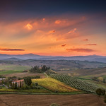 Olive Trees and Vineyard in Tuscany at sunrise, Italy thumbnail