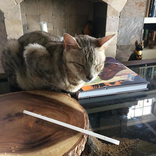 Happy #caturday #furriends! My sweet #kitty Chomps hopes your weekend is #meowonderful! #bengalcat #bengalcatsofinstagram #ig_bengals #instacat #cat @paseoartsdistrict #catsofpaseo #ilovemycat