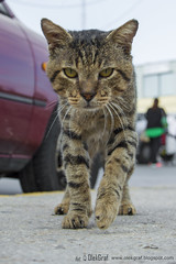 The cat is coming (OlekGraf) Tags: cat furry animals cute kitty brown nikon nikonflickraward nikond3200 d3200 flickrtravelaward travel greece hersonissos vacation manfrotto
