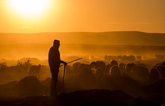 Shepherd and herd (yasar metin) Tags: shepherd oban hayat koyun sr insan life light love landscape dark loneliness last metin yaar turk trk ngc nazar krehir huzur zaman zor inziva kamak kaybolmak photographer photography plan photo people photographers umut mit mutluluk fotograf fotoraf canon 70d canon70d sunset outdoor serene sky