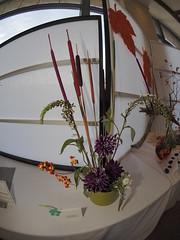 Bittersweet, Calla Lillies, Dianthus & Cat Tails by Pat Kindela of the Ikenobo & Koryu Schools (nano.maus) Tags: fisheye lauritzengardens japaneseflowerarrangement omahabotanicalsociety japaneseambiencefestival