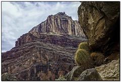 _DSC8328-a Photograph by Celest (tellytomtelly) Tags: arizona cactus grandcanyon grandcanyonnationalpark grandcanyonexpeditions coloradoroiver