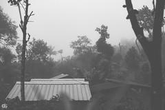 IMG_6246 (athingcalledlife) Tags: blackandwhite india green art nature rain photography colours lush coorg virajpet vsco