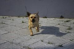 Perrete (Nimbo Foto) Tags: dog angry enfado