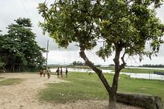 H502_2178 (bandashing) Tags: england tree boys children manchester play monsoon marbles gamble sylhet bangladesh socialdocumentary aoa bandashing akhtarowaisahmed 22tila goyainnodi