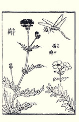 Thistle and ganpi (Japanese Flower and Bird Art) Tags: flower art japan japanese book thistle picture cirsium asteraceae woodblock ukiyo lychnis caryophyllaceae yoshimori coronata utagawa ganpi readercollection