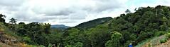 Paramin, Trinidad,T&T  - Explored (Trinimusic2008 -blessings) Tags: trinimusic2008 judymeikle nature mist mountain paraminnorthernrange trinidad colours colors tropical island trinidadandtobago tt october 2015 outdoors panorama panasonicdmczs45 explored