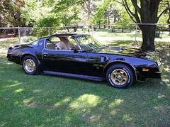 '76 Black Bird