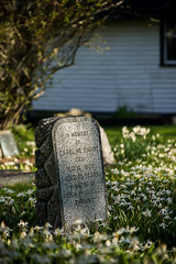 Remember (Prestidigitizer) Tags: church grave headstones victoria lilies remembranceday 1111 metchosin november11 stmaryscemetery pentaxda50135mm pentaxk3