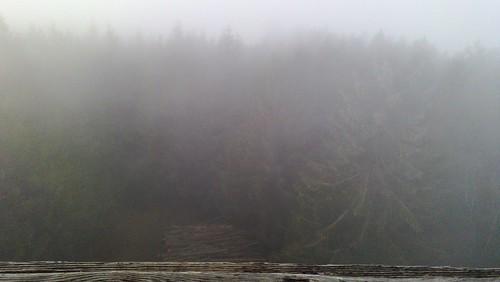 Hutwisch im Nebel 11