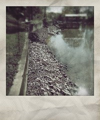 Weiss Lake at Winter Pool / November 15, 2015 (steveartist) Tags: stones seawall lakebottom weisslake stevefrenkel centrealabama winterpool fakepolaroidphotos phototoaster instantapp lgescape2 lakesatlowpool