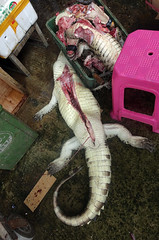 Slaughtered Alligator (cowyeow) Tags: guangzhou china food asian asia reptile chinesefood chinese alligator guangdong slaughter disturbing herp harsh herps cruelty herpetology cruel asianculture