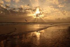 New Beginnings, New Hope... (Behappyaveiro) Tags: newbeginnings newhope newdream happynewyear praiademontegordo algarve portugal europa montegordo brilliant f