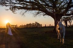Ensaio (HenriqueMBauer) Tags: sunset pordosol casal gaucho nikon fazenda sun sol trash dress trashthedress casamento ensaio noiva noivo ao ar livre cu prdosol cavalo horse animals