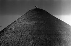 (bettsdg) Tags: blackwhite bw bianconero analogico analogue oympus om10 kodak tmax400 50mm zuiko nature bird romania sfntu gheorghe summer roof monochrome