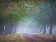 2016-10-21 brume (31)alle (april-mo) Tags: fog mist mistymorning brume arbres trees autumn villerscampeau wood