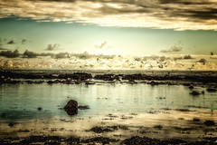 fly away (Morag.) Tags: seagulls bird beach seaside stonehaven scotland sky sea nikon d3300 nikkor autumn fall fly