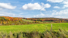 Fields of gold (John Getchel Photography) Tags: clouds newyork persia backroads fallcolor farmland grass green rollinghills cattaraugus unitedstates us