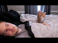 7 Ways Cats Creep You Out! (Download Youtube Videos Online) Tags: 7 ways cats creep you out