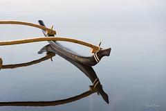 22102016-PBP_6026 (Berns Patrick) Tags: pins landes lac azur foret soleil matin ponton pigne