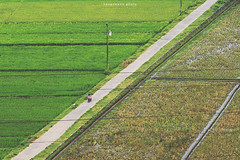 Diagonal (hauptmann photo) Tags: rice indonesia indonesiamemotret ijo yogyakarta ricefield nature road diagonal street cinematic composition landscape color sawah country village