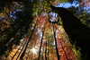 Indarraren Irati II (Gure Elia) Tags: nafarroa november autumn otoño noviembre selvadeirati irati bosque tree árbol forest woods canoneos5dmarkii canon1740l