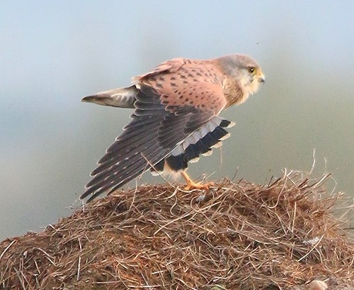 kestrel workout