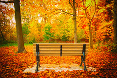 A Seat in Autumn (A Great Capture) Tags: ig agreatcapture agc wwwagreatcapturecom adjm toronto on ontario canada canadian photographer northamerica ash2276 ashleylduffus ald mobilejay jamesmitchell fall autumn automne herbst 2016 landscape paisaje paysage landschaft colours colors light sun sunny sunshine eos digital natur nature naturaleza natura canopy scenery scenic outdoor outdoors vibrant colorful cheerful vivid bright woods leaves leaf foliage autumnleaves bench taylorcreektrail taylorcreek park parc changing colour color colourful parkbench seat serene trees