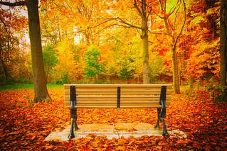 A Seat in Autumn