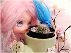 Little friend  (Pliash) Tags: doll cute kawaii pink cacto sakura flower zelfo blue madeleinedolls madeleine dolls custom fashion asian little hito eyes chips rewigged rechiped