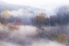 Foggy trees (debbie_dicarlo) Tags: fog foggymorning fogandtrees treesinfog cascadeoverlook summitmetroparks nature layersoffog
