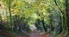 Tree Tunnel (Tedz Duran) Tags: tedzduran treetunnel tree tunnel trees old roman road halnaker chichester england uk unitedkingdom landscape people autumn fall colours colors fallen leaves roadtrip travel photography british beautiful leica apo summicron 90mm f2 asph sony a7rii outdoor plants