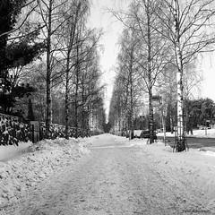 Hietaniemi, Helsinki (Timo Alatalkkari) Tags: rollei rolleiflex carlzeiss jena 75mm tessar ilford delta 400 id11 city cityscape landscape