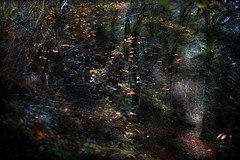 Chemin d'automne (Isabelle Aurore) Tags: fort forest chemin feuille bretagne stangala trees