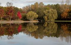 (mennomenno.) Tags: bomen trees herfst autumn kleuren colours reflections reflecties bergsebos