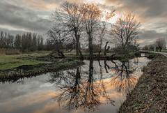 December (Jorden Esser) Tags: middendelfland december reflection sunset trees water winter nederlandvandaag treemendoustuesday