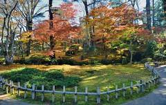 Fall at Kenroku-en (jpellgen) Tags: japan japanese nihon nippon  ishikawa kanazawa kenrokuen garden zen     asia nikon 2016 fall autumn sigma 1770mm d7000 leaves leaf momiji koyo maple november travel honshu park nature scenery