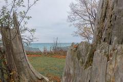 Autumn Lakeview (gabi-h) Tags: sandbanks sandbanksprovincialpark lakeontario snowfence trees water gabih landscape view november beach shore lakeshorelodge treestumpcarvings treestumps