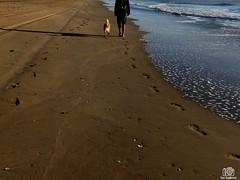 PC060212 (Tam Gugliermo) Tags: beach ocean nature sky naturaleza boy photography fotografia argentina crab animals dog wave dawn sun sunshine
