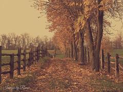 Il Mariano - Noceto Pr (ramonapartelli) Tags: autunno allaperto foglie alberi sentiero staccionata campagna silenzio