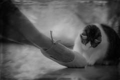 La professora i la ballarina (Kaobanga) Tags: professora profesora teacher ballarina bailarina dancer gat gata gato cat assaig ensayo rehearsal essai ella she elle blancinegre blancoynegro blackandwhite bn bw canon5dmarkii canon5dmkii canon5dmk2 canon1635 1635 1635mm canon1635mm kaobanga