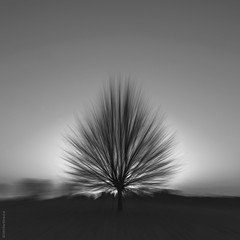 """losing sight"" (B.Graulus) Tags: photography monochrome belgium tree blackandwhite belgi belgique canon"