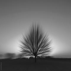 """losing sight"" (B.Graulus) Tags: photography monochrome belgium tree blackandwhite belgië belgique canon"