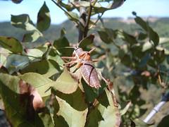 Rejtőszín (ossian71) Tags: magyarország hungary bakony természet nature rovar insect