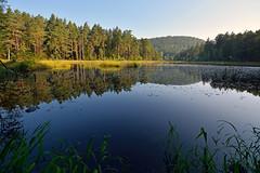 Etang-tourbire du Welschkobert Bas (Excalibur67) Tags: forest landscape nikon sigma reflexion reflets paysages eaux tangs d7100 vosgesdunord forts ex1020f456dchsm