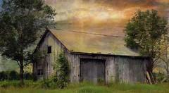 Hot Tin Roof ...........Explored..thankyou (Beaches Marley.....iPad art) Tags: roof ontario abandoned barn tin glaze bayfield laminar ipad memoriesbook